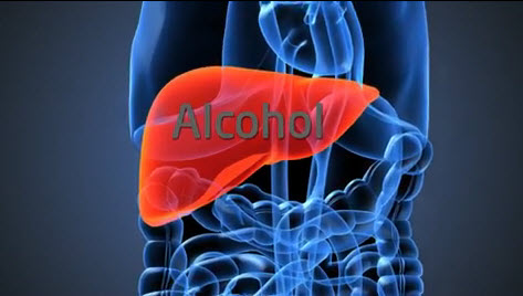 Liver and alcohol diagram