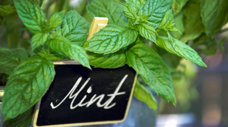 Mint salad dressing