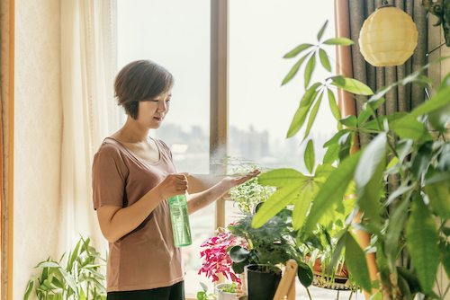 A woman waters her houseplants.