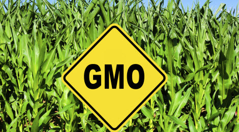 Genetically modified food risk essay